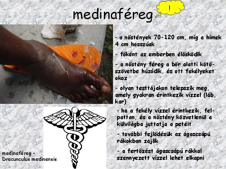 FÉREGATKÁK (Pentastomidae)