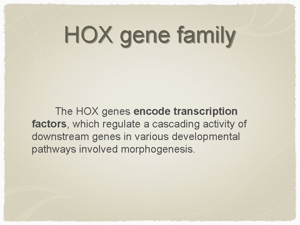 HOX gene family The HOX genes encode transcription factors, which regulate a cascading activity