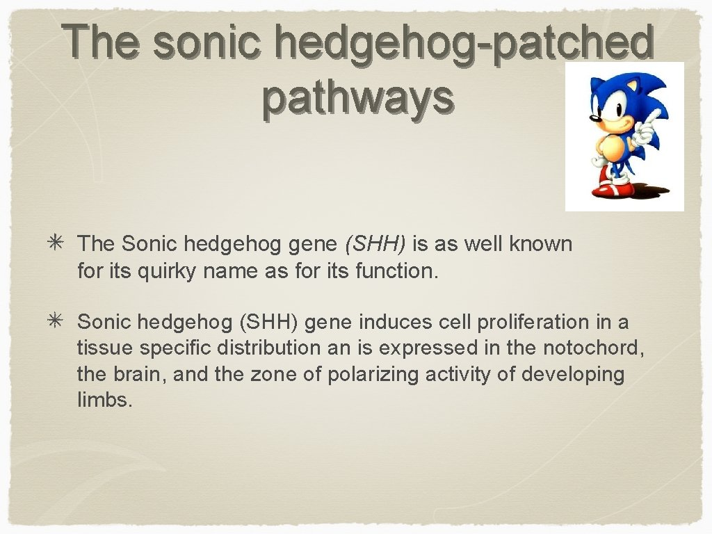 The sonic hedgehog-patched pathways The Sonic hedgehog gene (SHH) is as well known for
