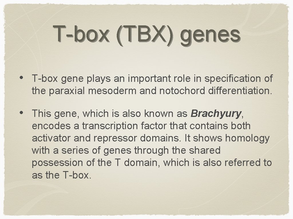 T-box (TBX) genes • T-box gene plays an important role in specification of the