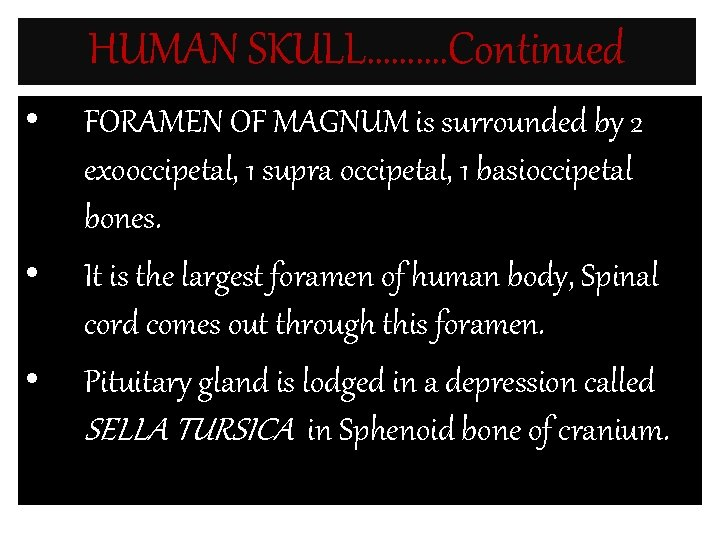 HUMAN SKULL………. Continued • • • FORAMEN OF MAGNUM is surrounded by 2 exooccipetal,