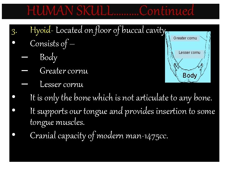 HUMAN SKULL………. Continued 3. • Hyoid- Located on floor of buccal cavity. Consists of