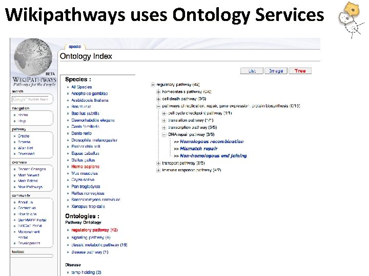 Wikipathways uses Ontology Services