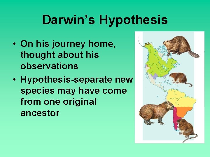 Darwin's Hypothesis • On his journey home, thought about his observations • Hypothesis-separate new