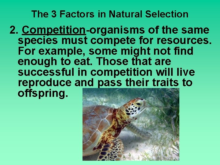 The 3 Factors in Natural Selection 2. Competition-organisms of the same species must compete