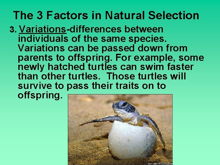 The 3 Factors in Natural Selection 3. Variations-differences between individuals of the same species.