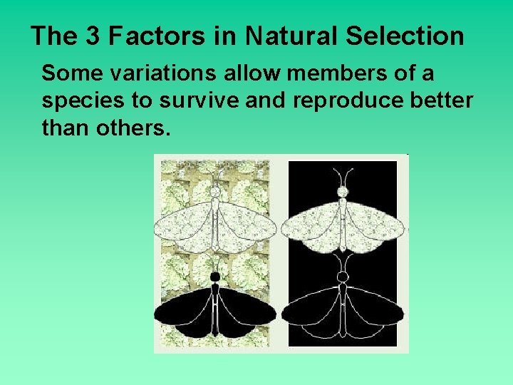 The 3 Factors in Natural Selection Some variations allow members of a species to