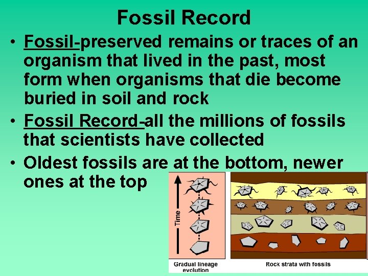 Fossil Record • Fossil-preserved remains or traces of an organism that lived in the