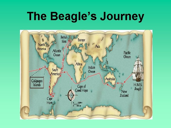 The Beagle's Journey