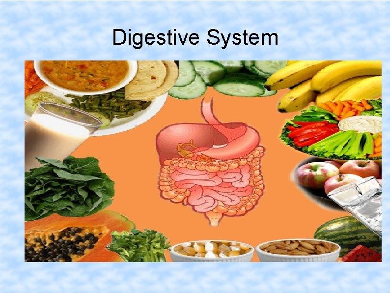 Digestive System Dr. Spandana Charles