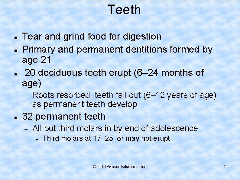 Teeth Tear and grind food for digestion Primary and permanent dentitions formed by age