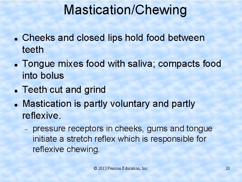 Mastication/Chewing Cheeks and closed lips hold food between teeth Tongue mixes food with saliva;