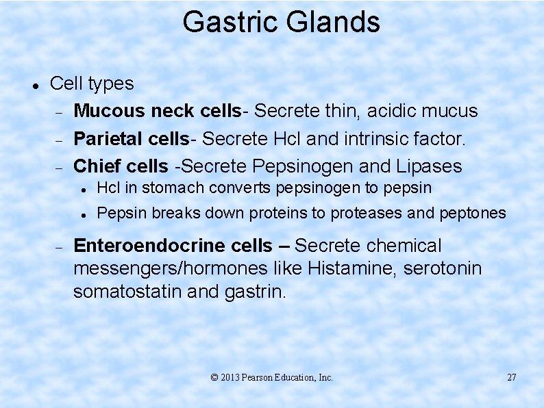 Gastric Glands Cell types Mucous neck cells- Secrete thin, acidic mucus Parietal cells- Secrete