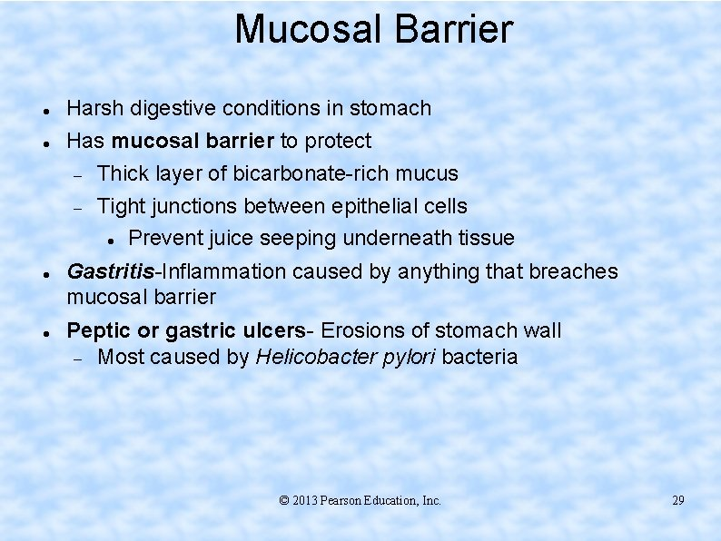 Mucosal Barrier Harsh digestive conditions in stomach Has mucosal barrier to protect Thick layer
