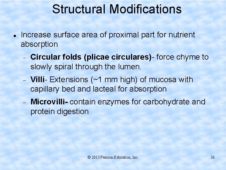 Structural Modifications Increase surface area of proximal part for nutrient absorption Circular folds (plicae