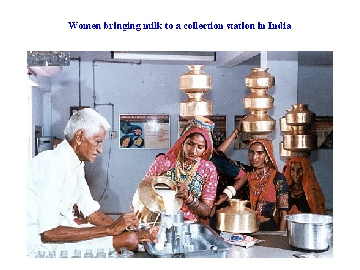Women bringing milk to a collection station in India