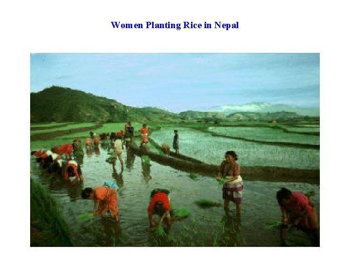 Women Planting Rice in Nepal