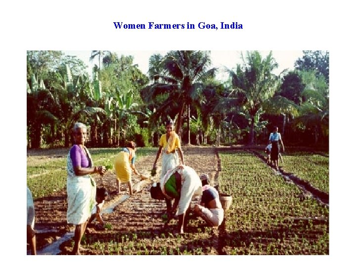 Women Farmers in Goa, India
