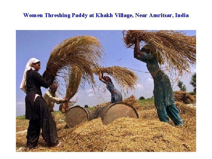 Women Threshing Paddy at Khakh Village, Near Amritsar, India