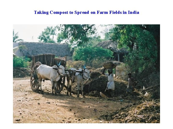 Taking Compost to Spread on Farm Fields in India