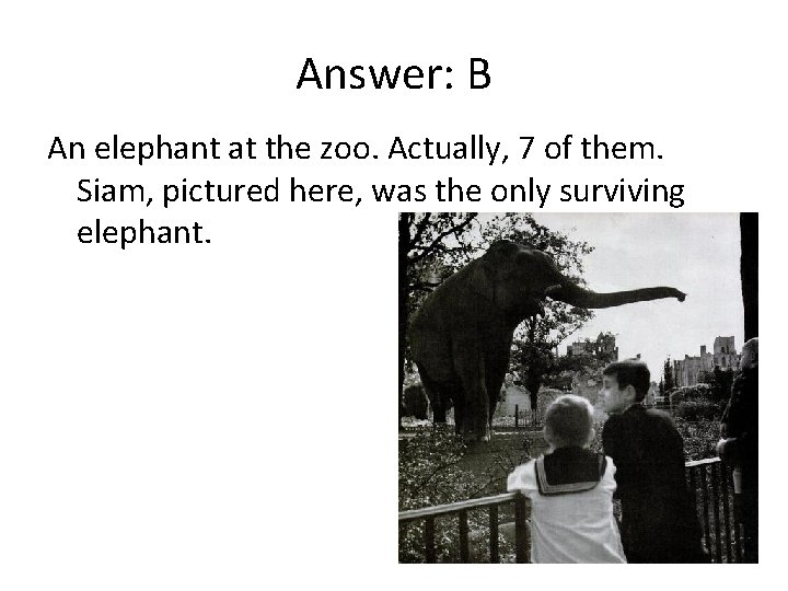 Answer: B An elephant at the zoo. Actually, 7 of them. Siam, pictured here,