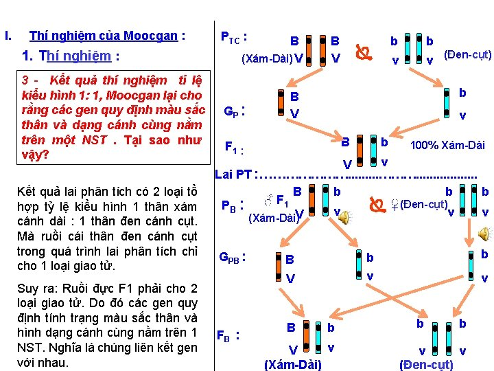 I. Thí nghiệm của Moocgan : 1. Thí nghiệm : 3 - Kết quả