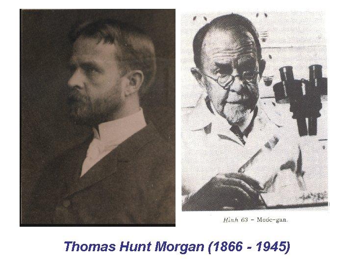 Thomas Hunt Morgan (1866 1945)