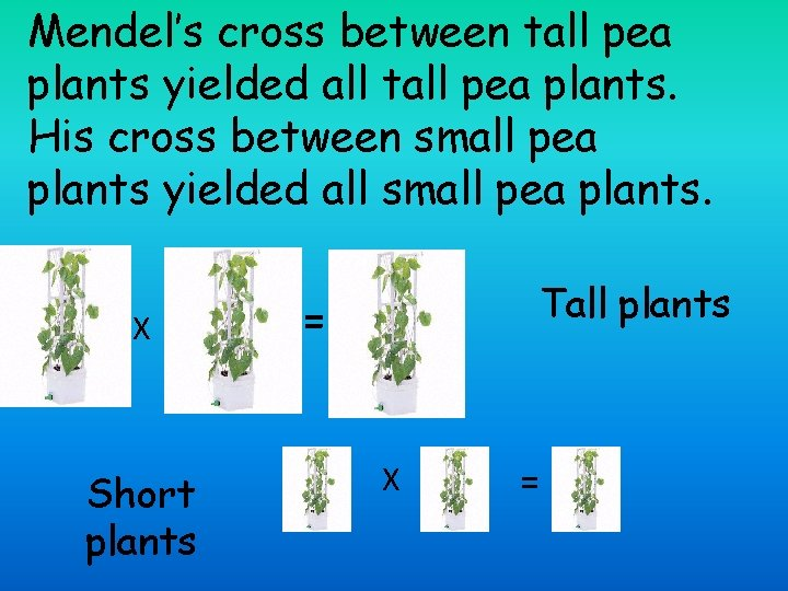 Mendel's cross between tall pea plants yielded all tall pea plants. His cross between
