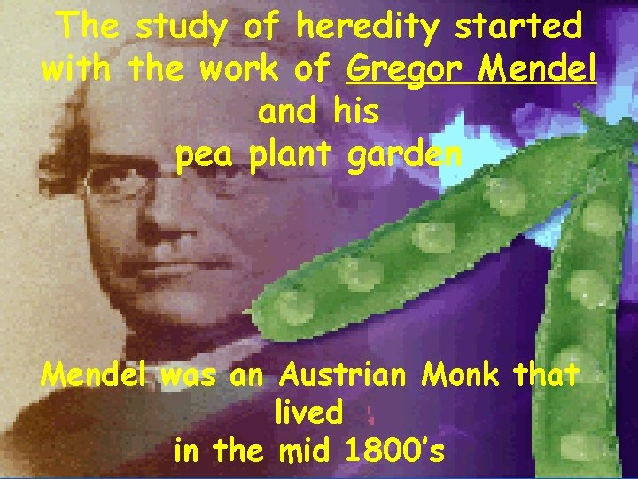 The study of heredity started with the work of Gregor Mendel and his pea