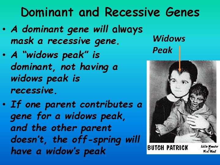 Dominant and Recessive Genes • A dominant gene will always mask a recessive gene.