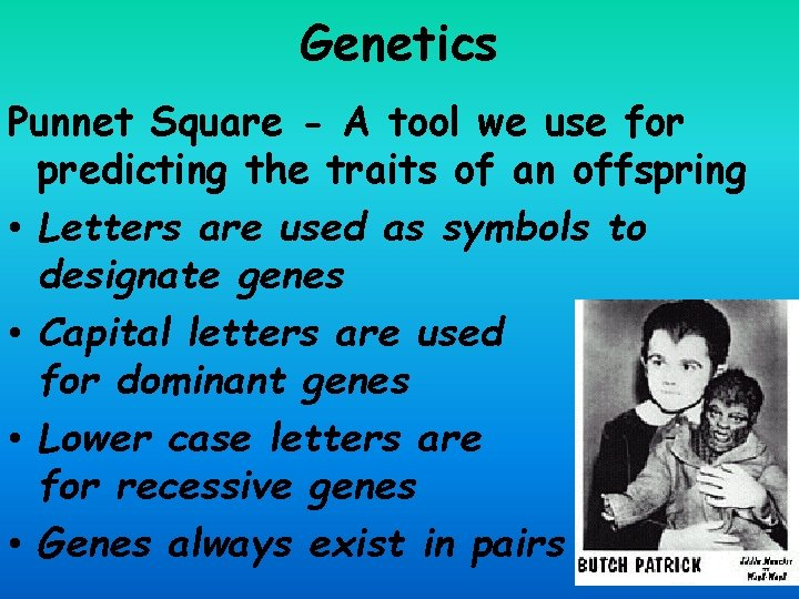 Genetics Punnet Square - A tool we use for predicting the traits of an