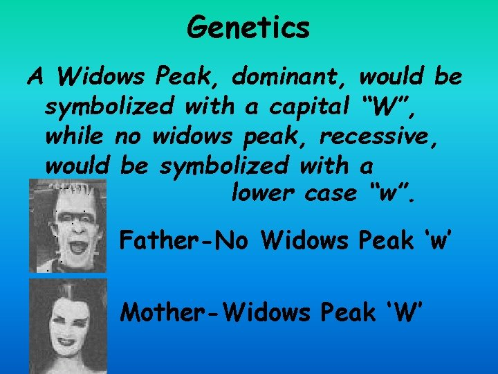 """Genetics A Widows Peak, dominant, would be symbolized with a capital """"W"""", while no"""