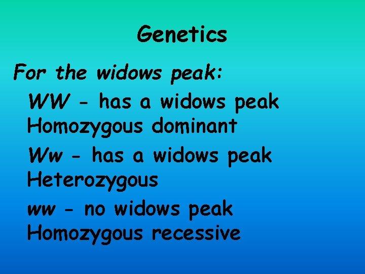 Genetics For the widows peak: WW - has a widows peak Homozygous dominant Ww