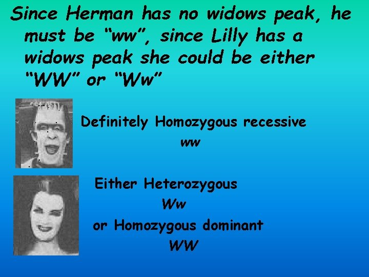 """Since Herman has no widows peak, he must be """"ww"""", since Lilly has a"""