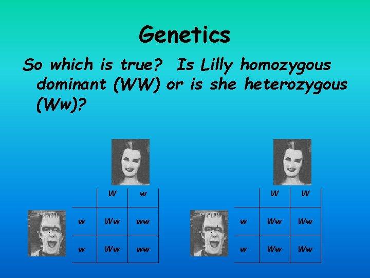 Genetics So which is true? Is Lilly homozygous dominant (WW) or is she heterozygous