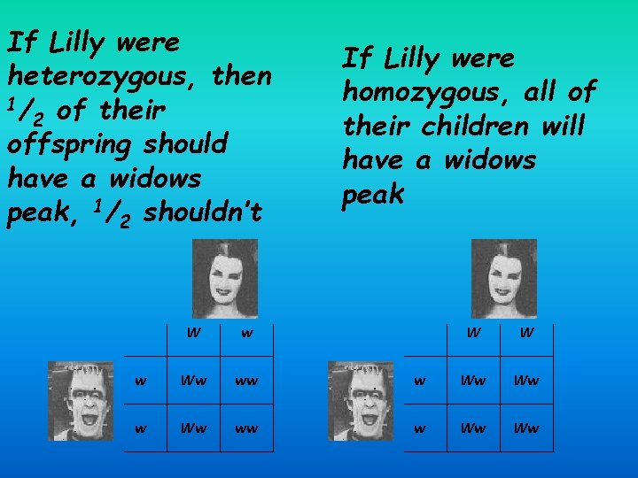 If Lilly were heterozygous, then 1/ of their 2 offspring should have a widows