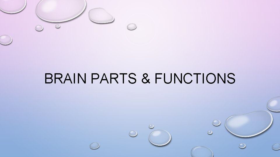 BRAIN PARTS & FUNCTIONS