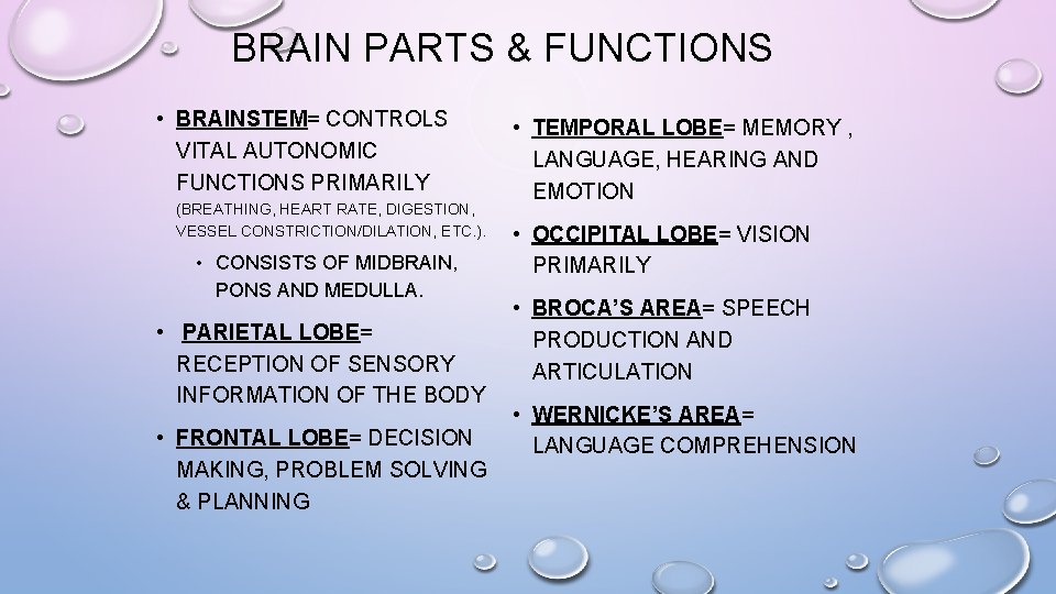 BRAIN PARTS & FUNCTIONS • BRAINSTEM= CONTROLS VITAL AUTONOMIC FUNCTIONS PRIMARILY (BREATHING, HEART RATE,