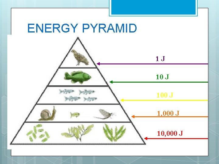ENERGY PYRAMID 1 J 100 J 1, 000 J 10, 000 J