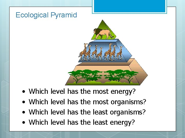 Ecological Pyramid • • Which level has has the the most energy? most organisms?