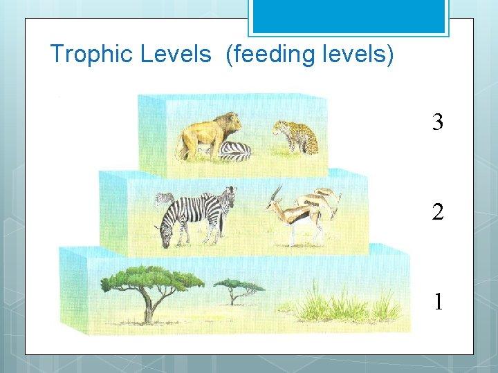 Trophic Levels (feeding levels) 3 2 1