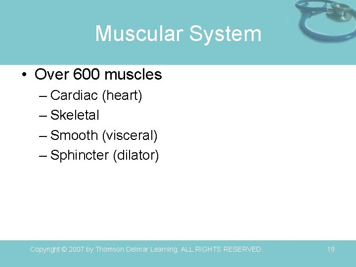 Muscular System • Over 600 muscles – Cardiac (heart) – Skeletal – Smooth (visceral)