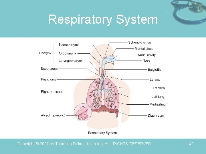 Respiratory System Copyright © 2007 by Thomson Delmar Learning. ALL RIGHTS RESERVED. 40