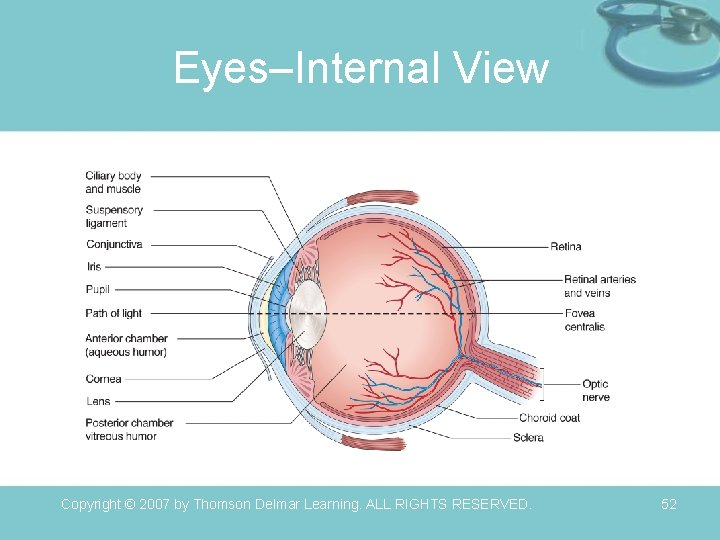 Eyes–Internal View Copyright © 2007 by Thomson Delmar Learning. ALL RIGHTS RESERVED. 52