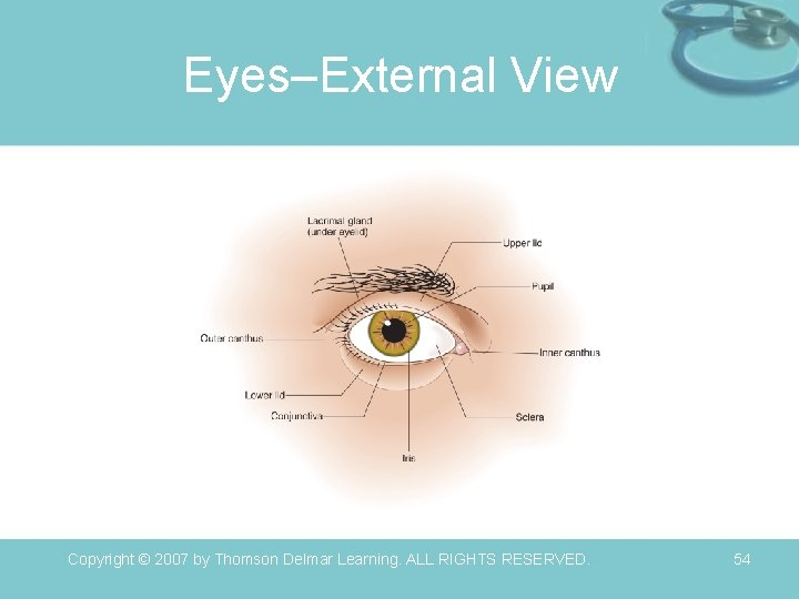 Eyes–External View Copyright © 2007 by Thomson Delmar Learning. ALL RIGHTS RESERVED. 54
