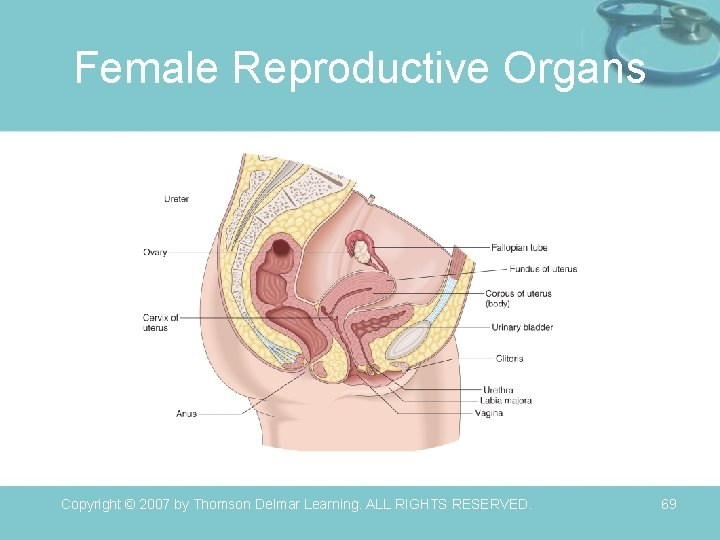 Female Reproductive Organs Copyright © 2007 by Thomson Delmar Learning. ALL RIGHTS RESERVED. 69