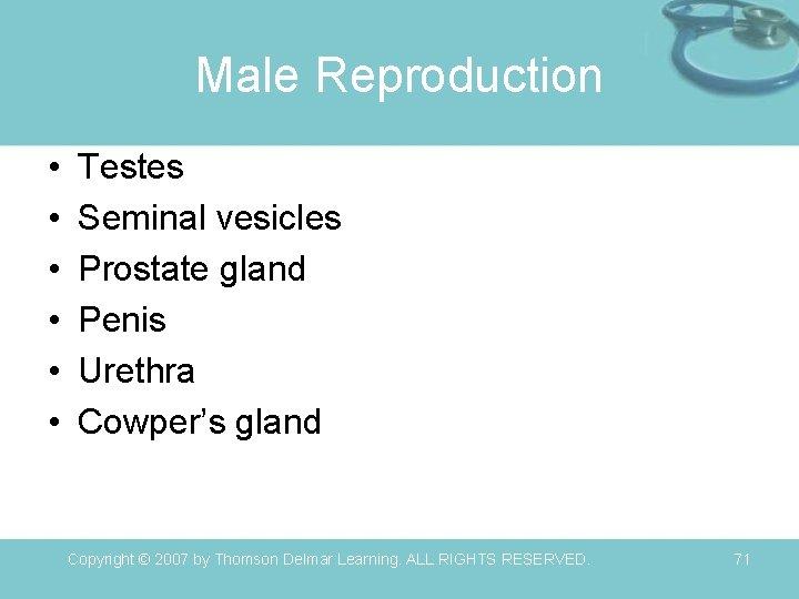Male Reproduction • • • Testes Seminal vesicles Prostate gland Penis Urethra Cowper's gland