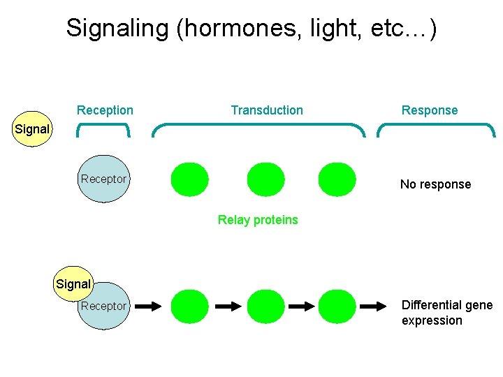 Signaling (hormones, light, etc…) Reception Transduction Response Signal Receptor No response Relay proteins Signal