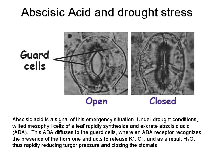 Abscisic Acid and drought stress Abscisic acid is a signal of this emergency situation.