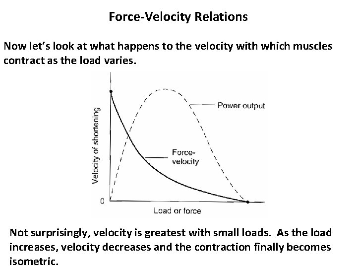 Force-Velocity Relations Now let's look at what happens to the velocity with which muscles
